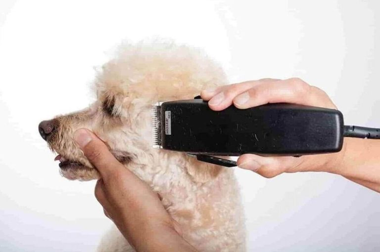 mejores cortapelos perros