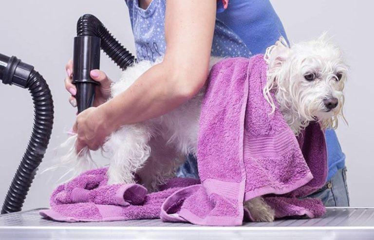 mejores secadores de pelo perros